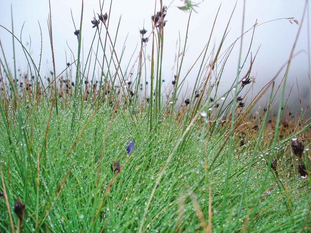 Artenreiche Flora auf dem Pfunderer Höhenweg